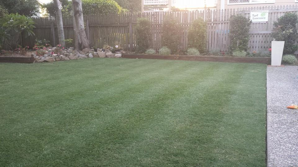 Seeding Qld Blue Couch Some Different Turf Types Outdoorking